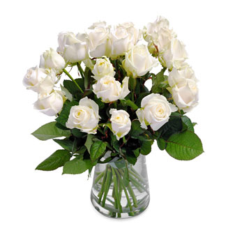 Wonderful white roses
