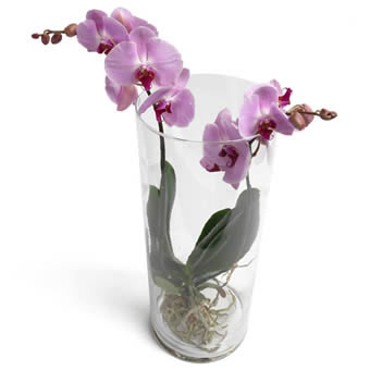 Trendy Tower of Phalaenopsis Orchids