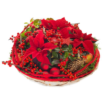 Luxury poinsettias