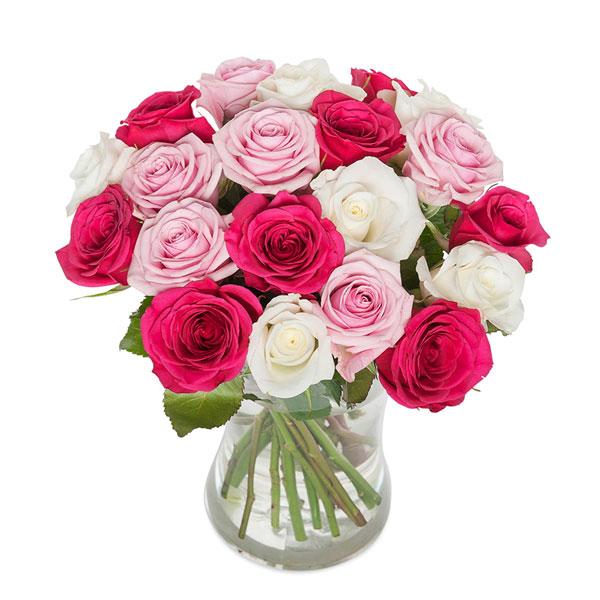 Rosa rosmix