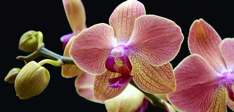 Skötselråd orkidéer