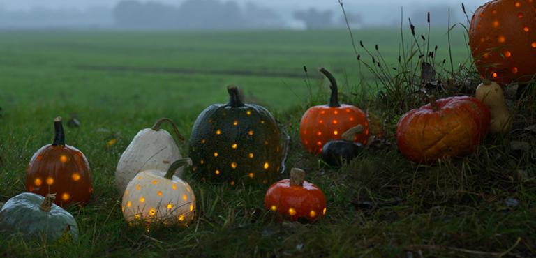Halloweenblommor