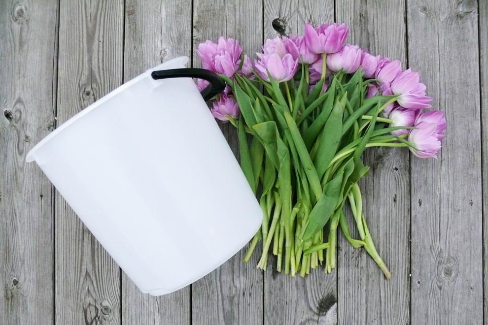 En bukett tulpaner och en 10-liters plasthink.