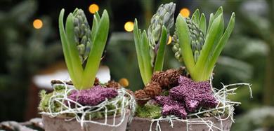 Julgrupper och plantor