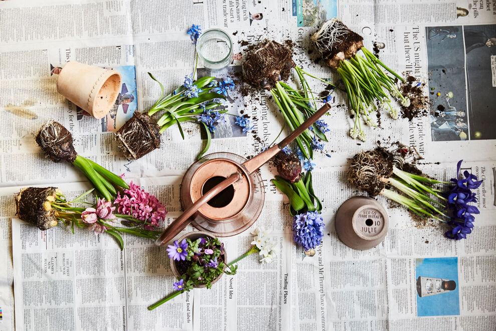 På en uppslagen morgontidning ligger olika lökväxter utlagda, en vatten kanna i mässing står i mitten och det ligger någon kruka och glasvas bredvid. Det är dags att plantera hyacinter.