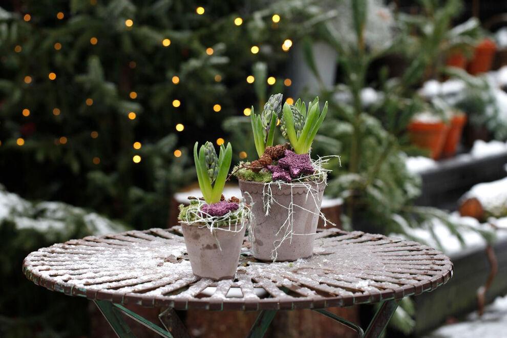 På ett snötäckt runt bord i metall står två gråa krukor med planterade hyacinter. Som dekoration ligger ett par kottar och några lila glittriga stjärnor, längs kanten hänger lite vita lavar nonchalant utslängda.