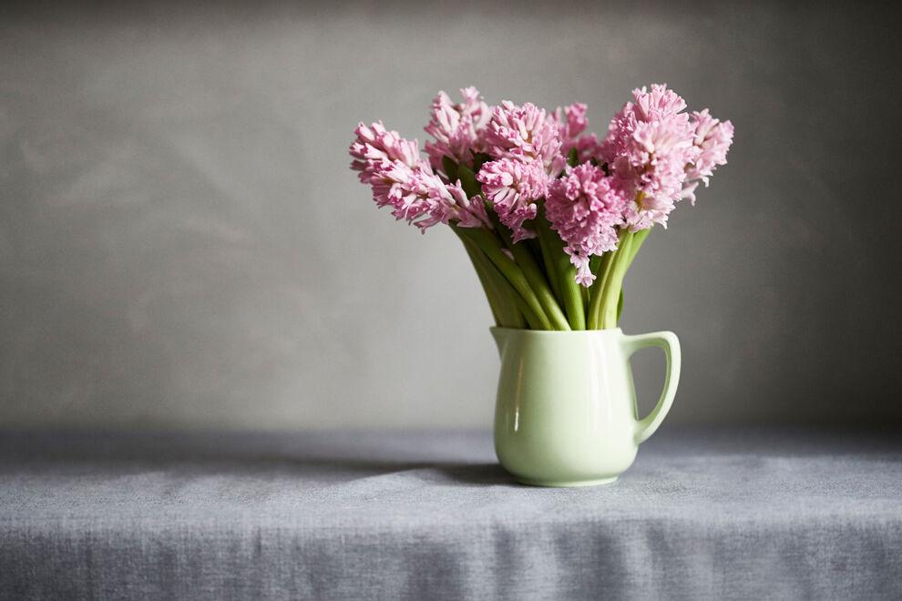 Ett fång rosa hyacinter i en emaljerad kanna står på ett bord med en grå duk, mor en grå bakgrund